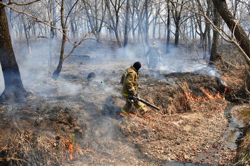 В лес – ни ногой! Особый противопожарный режим введен в Ярославской области на 21 день
